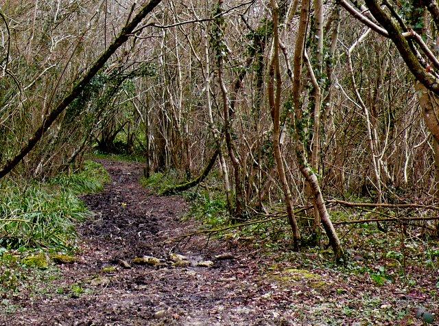 Muddy track through the woods