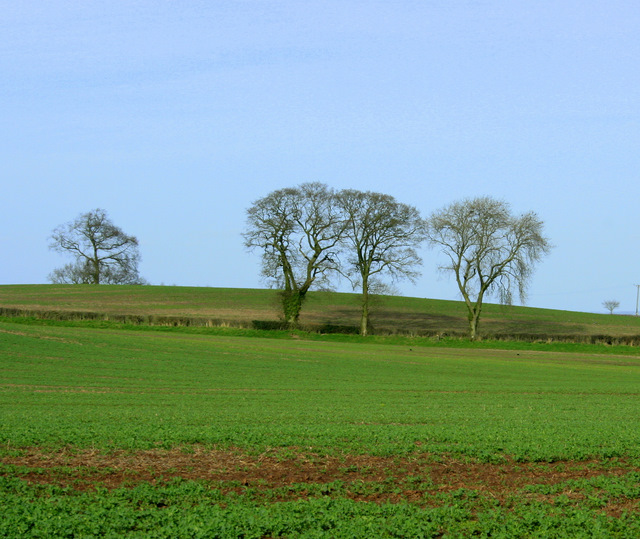 2009 : Farmland and trees near Stanton Wick