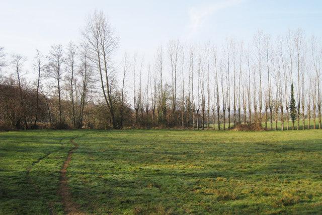 Row of Poplar's near Glottenham Manor