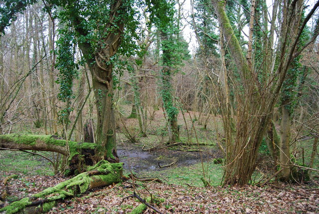 A boggy hollow, Wick Wood