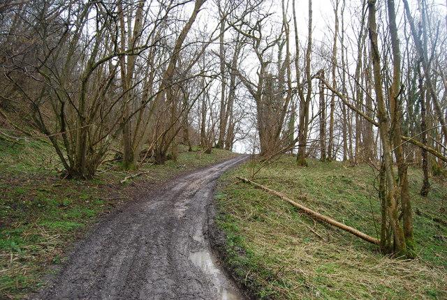 The Hanger Way through Wick Wood