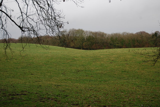 Large field surrounded by Wick Wood
