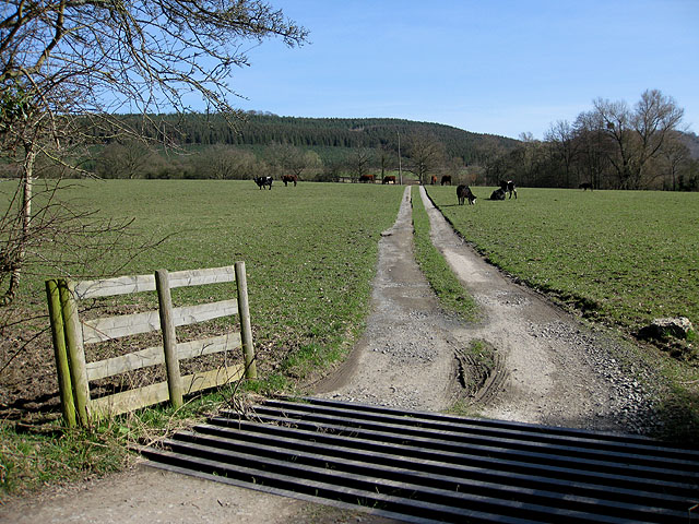 Cattle grid and pasture, Pentaloe Fields