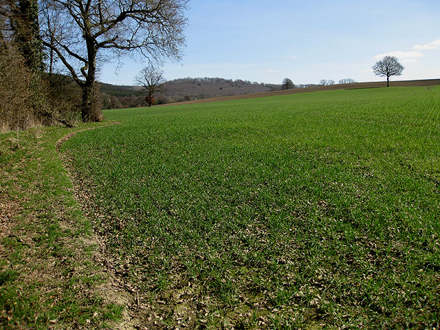 Field boundary south of Checkley