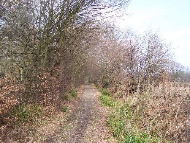 Bridleway past Coldbridge Wood