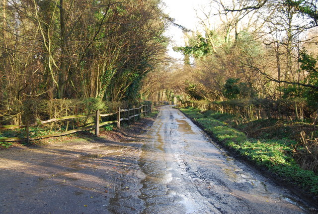 Byway heading East through Hartley Wood