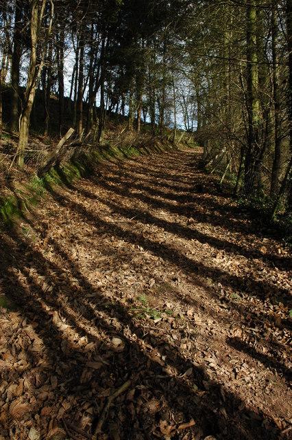 Woodland track, near Llangrove