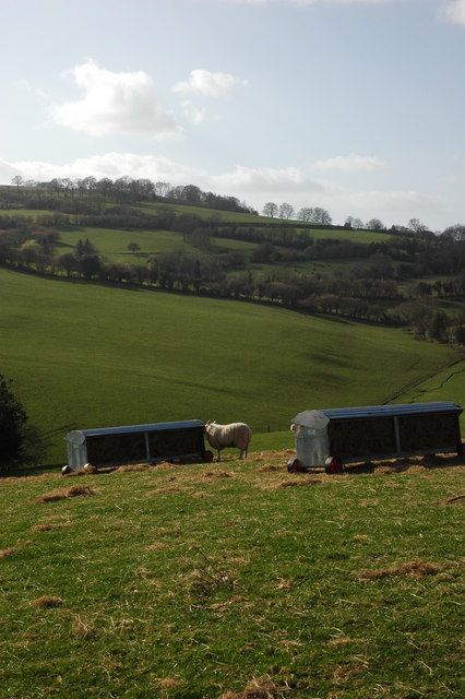 Sheep and sheep racks, Llangrove