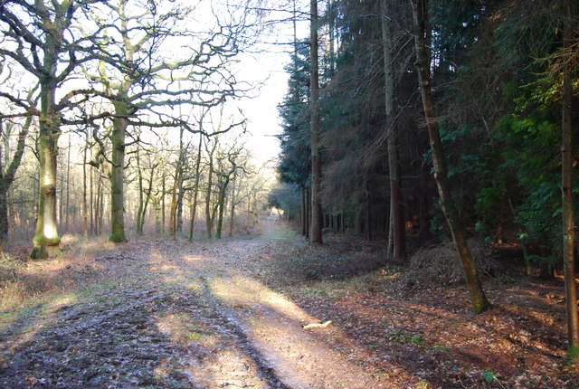 Hangers Way through Hartley Wood