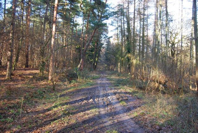 Hangers Way through Hartley Wood (2)