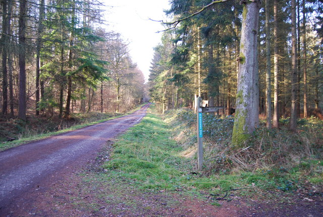 Hangers Way signposted off a woodland track, Hartley Wood