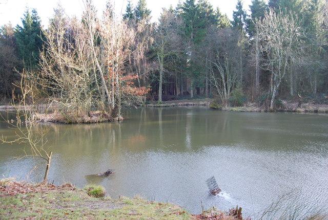 Pond, Hartley Wood (2)