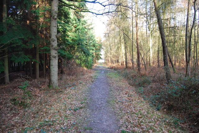 Hangers Way through Hartley Wood (3)