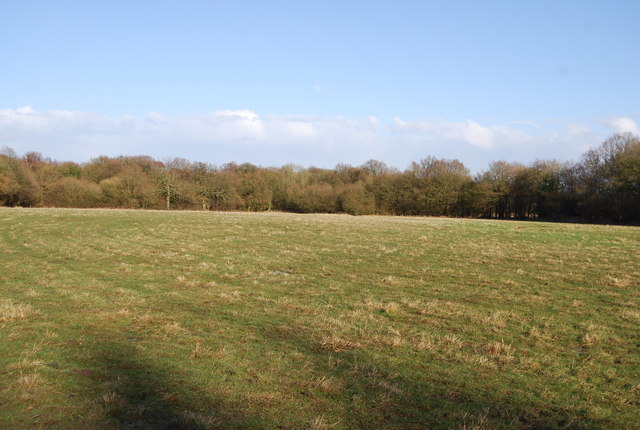 Northern edge of Hartley wood across a large clearing