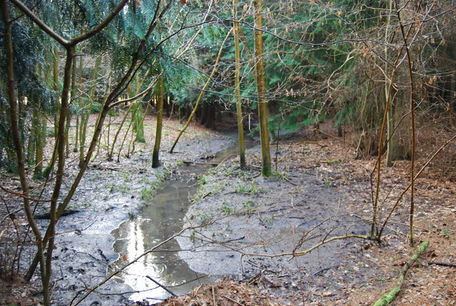 Small stream in Pheasant Wood