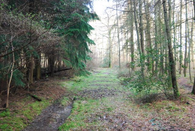 Hangers Way through Pheasant Wood