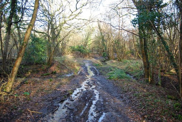 Hangers Way through Pheasant Wood (2)