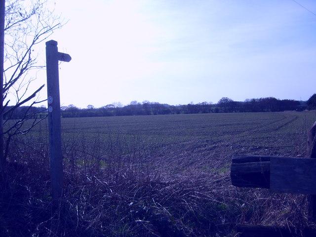 Lawn Lane Path