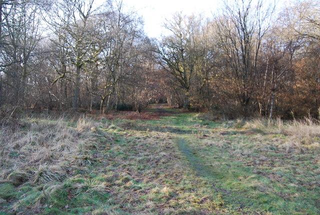 Footpath through Binswood