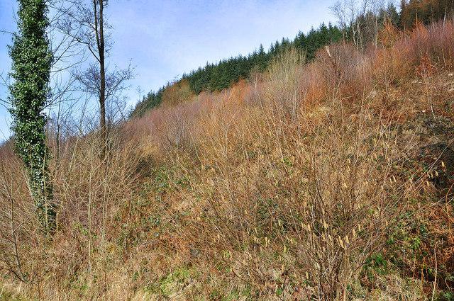 The lower slopes of Allt Forgan