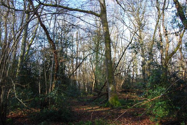 Dense woodland, Binswood