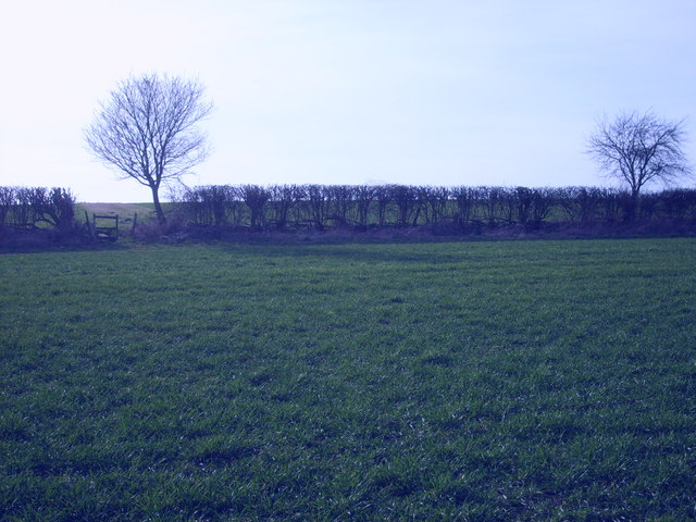 Hedge Stile
