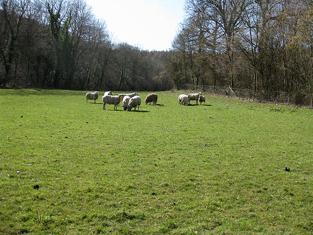 A small pasture between two woods