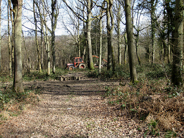 Lost in Sharpnage Wood