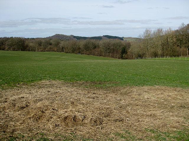 View Northwest over Sharpnage Wood to Backbury Hill