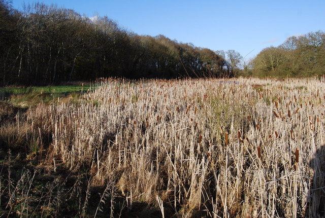 Rushes in a string of small ponds