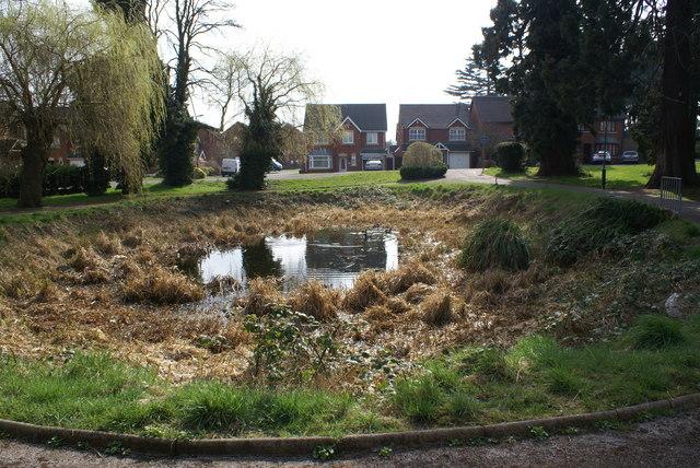 The pond lives on