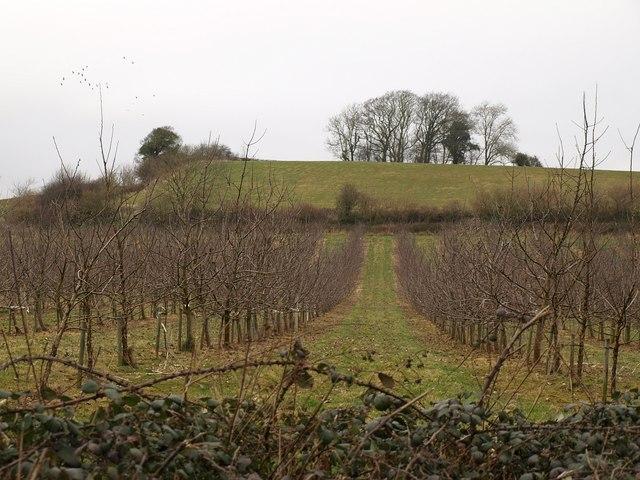Orchard, Rumwell