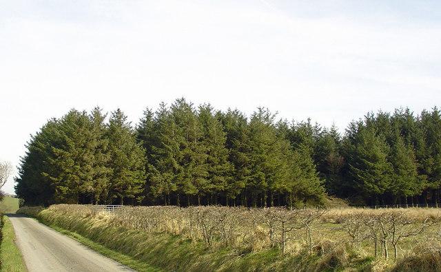 Woodland near Golden Grove, Cynwyl Elfed