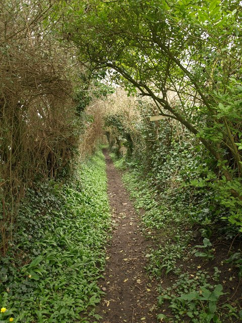 Footpath, Bower Hinton