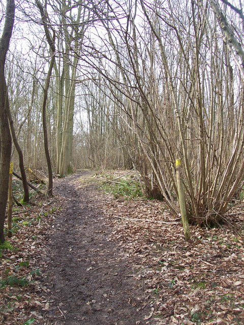 Footpath through Brick Kiln Wood