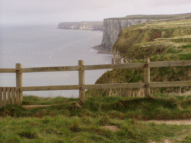 Just Down from Bempton Cliffs