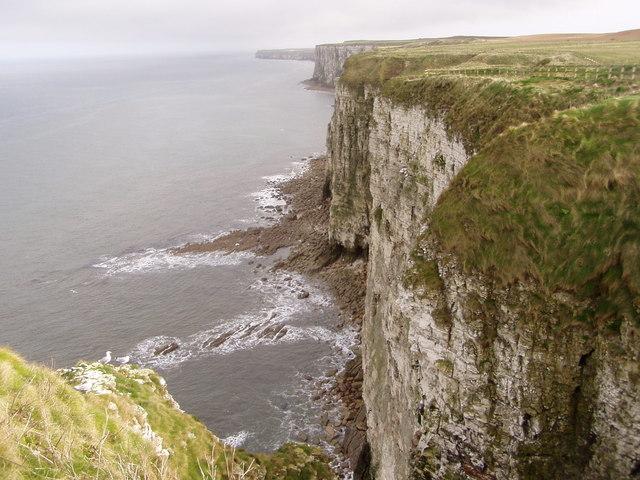 Cliffs Near Bempton
