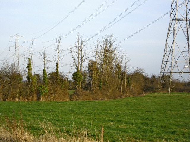 Trees and pylons
