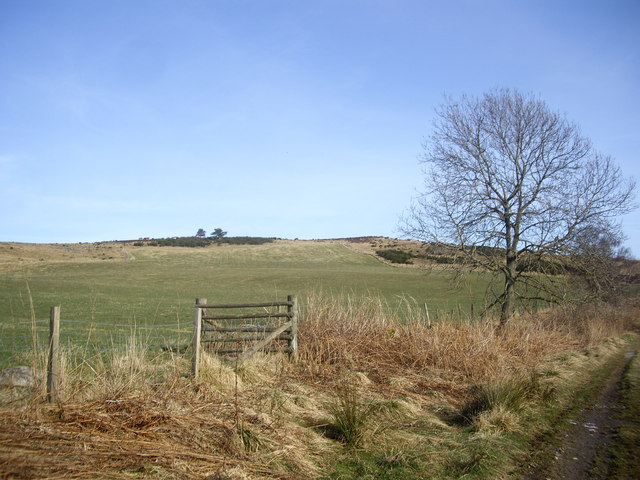 View east from near Denhead