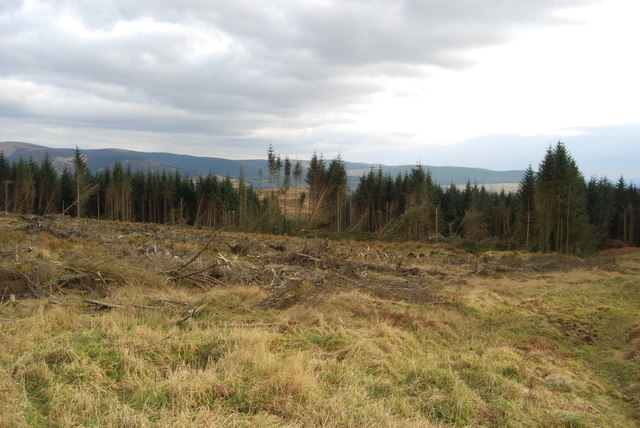 Clearfell area in centre of large scale forestry