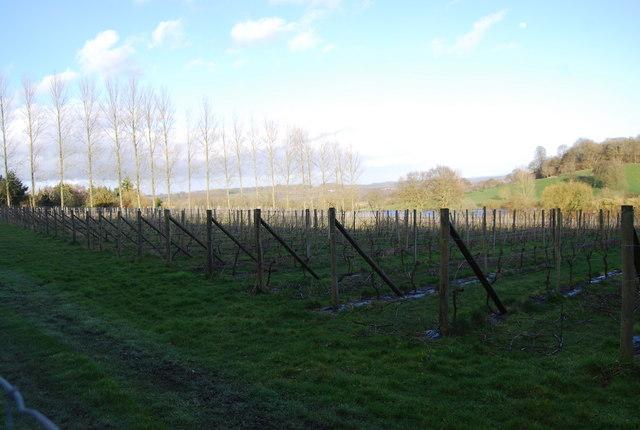 Fruit field near King John's Hill