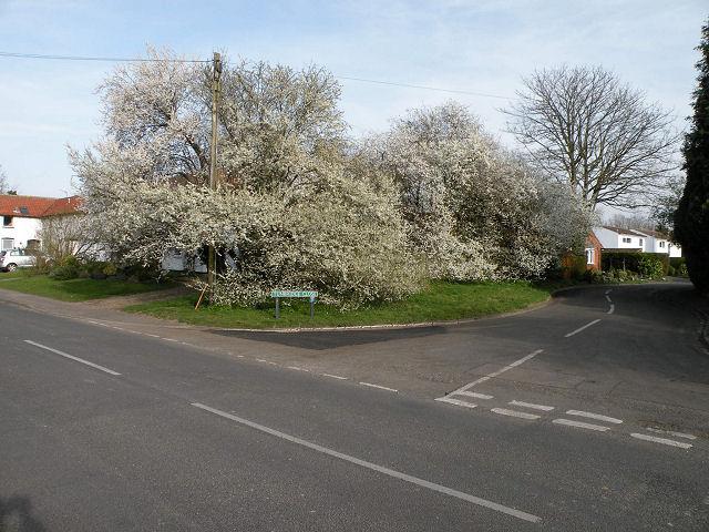 Springtime on Tunbridge Close