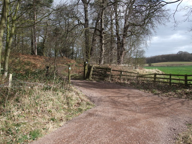 Bridleway at the eastern side of Clumber Park
