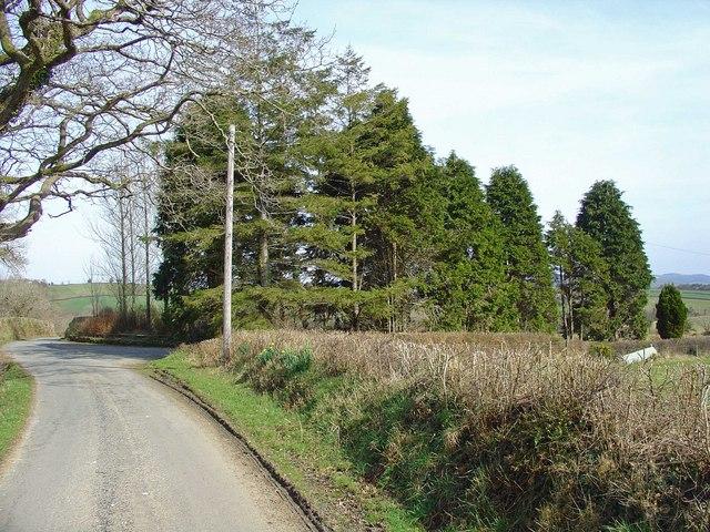 Trees near Nantbendigaid, Cynwyl Elfed