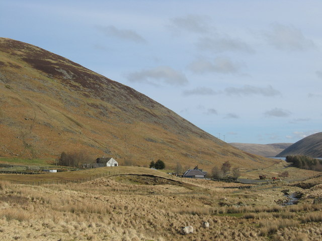 Sheep grazing near Meggethead