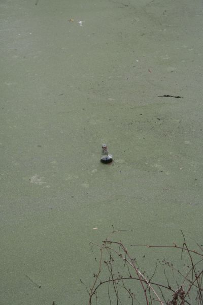 Bottle in the canal