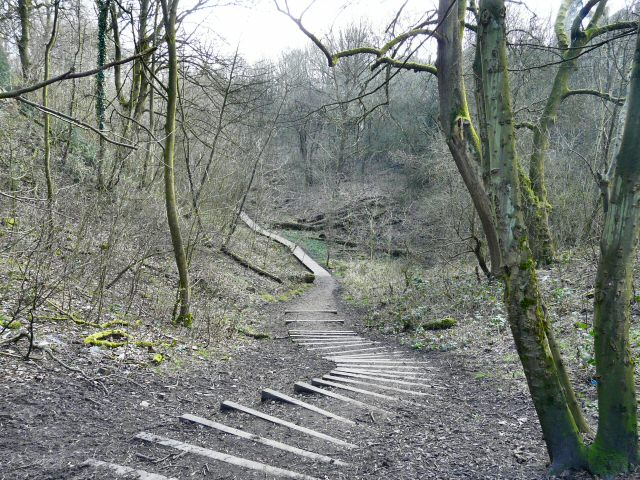 Track through Gower Hey Wood