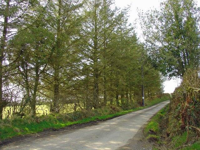 Roadside trees near Crych-du, Llanpumsaint