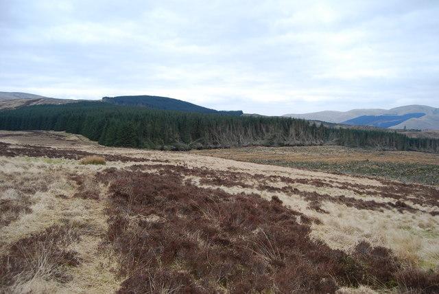 Forest edge and clearfell beside Merecleuch Hill