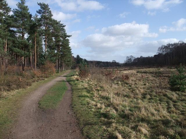 Bridleway across Clumber Park